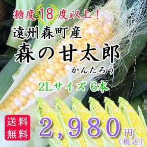 遠州森町産トウモロコシ 「甘太郎(かんたろう)」2Lサイズ6本|hamanako100