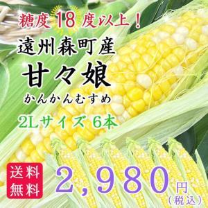 遠州森町産トウモロコシ 「甘々娘(かんかんむすめ)」2Lサイズ6本 hamanako100
