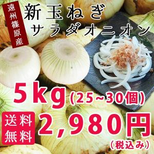浜松市篠原産 新玉ねぎ5kg(25個〜30個) hamanako100