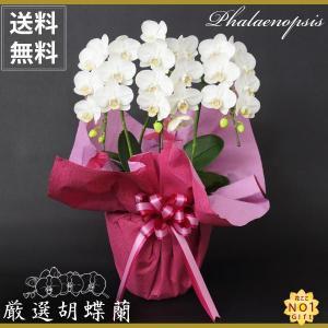花言葉は 幸せが飛んでくる 贈り物に最適です。 ラッピングして出荷させていただきます。 出荷から翌日...