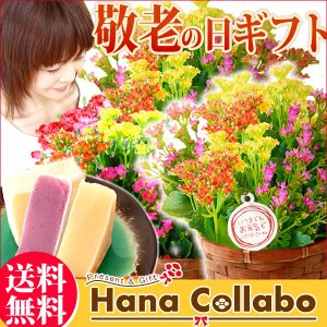敬老の日ギフト 人気 花(カランコエ)とスイーツ セット 花ギフト hana-collabo