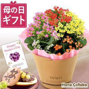 敬老の日 ギフト 鉢花 花 和菓子 セット プレゼント お菓子 スイーツ 生花 どら焼き|hana-collabo