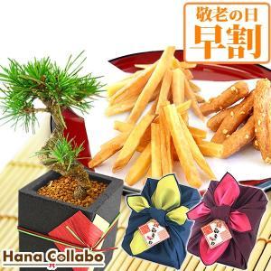 敬老の日 ギフト 松 盆栽 セット 和菓子 観葉植物 花 お菓子 プレゼント|hana-collabo