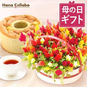 母の日 プレゼント 花 プレゼントランキング 鉢植え 花束 アレンジメント スイーツ  ケイトウ hana-collabo