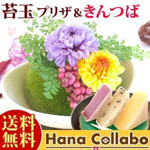 敬老の日プレゼント 盆栽 ミニ苔玉 ギフト プリザーブドフラワー 贈り物|hana-collabo