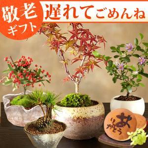 敬老の日 プレゼント 盆栽 苔玉 松 どら焼き 和菓子 セット お菓子 スイーツ ギフト|hana-collabo