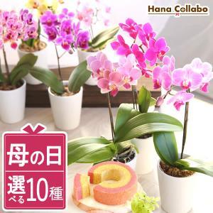 母の日 花 ギフト 母の日プレゼント 2019 胡蝶蘭 mothersday 鉢植え スイーツ カーネーション以外|hana-collabo