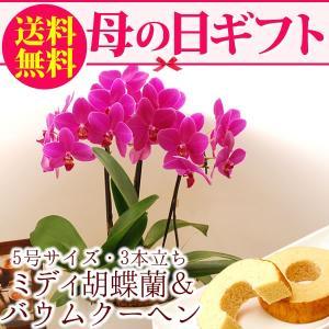 母の日プレゼント 花ギフト 胡蝶蘭 ピカソ バームクーヘン スイーツセット|hana-collabo