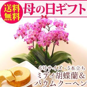 母の日プレゼント 花ギフト 胡蝶蘭 チュンリー バームクーヘン スイーツセット|hana-collabo