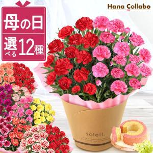 母の日 花 ギフト 母の日プレゼント スイーツ 2019 mothersday カーネーション 鉢植え お菓子|hana-collabo