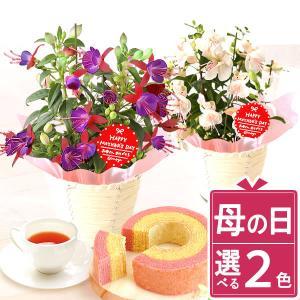 母の日 花 ギフト 2019 mothersday 鉢植え スイーツ カーネーション以外|hana-collabo