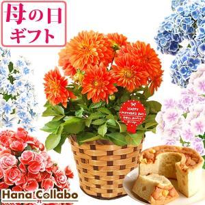 母の日 ギフト 2019 mothersday フラワーギフト 鉢植え 花 お菓子|hana-collabo