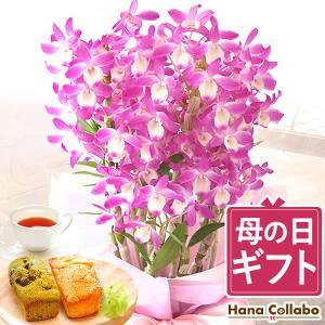 母の日 花 プレゼント スイーツ ギフト 胡蝶蘭 お菓子 限定ギフト ピンク 紫|hana-collabo