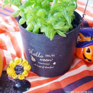 ハロウィン ガーデン雑貨 鉢カバー 木製 チアーパンプキンバケット|hana-kazaru