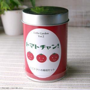 家庭菜園 キット ミニトマト 種 リトルガーデン 栽培キット缶 トマトチャン|hana-kazaru