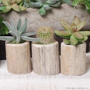 プランター おしゃれ 植木鉢 木製 流木フラワーポット ミニ 1個|hana-kazaru