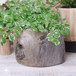 プランター おしゃれ 植木鉢 木製 流木フラワーポット 縦 BIG|hana-kazaru