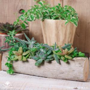 プランター おしゃれ 植木鉢 木製 流木フラワーポット 横長|hana-kazaru