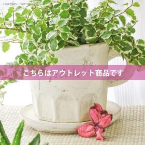 アウトレット 訳あり プランター おしゃれ 植木鉢 陶器 カッププランター 3.5号|hana-kazaru