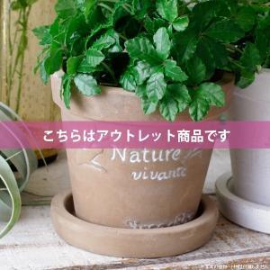 アウトレット 訳あり プランター おしゃれ 植木鉢  素焼きのシュクレ プティ ラウンド ブラウン 約4号|hana-kazaru