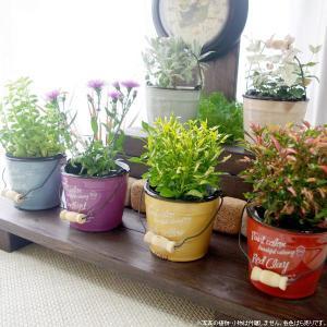 鉢カバー おしゃれな陶器のカラフルペイントバケツ|hana-kazaru