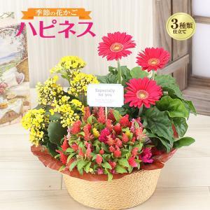 季節の花かご「ハピネス」 誕生日花ギフト、送料無料でお届けします。高さ(約)25cm、幅(約)25c...