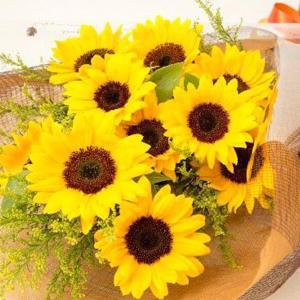 お祝い用花束(ひまわり)。送料・手数料無料。メッセージカード付。 hana-sandlot