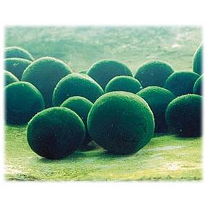 50個のボールが飛び出します! 打上げマリモ|hanabi