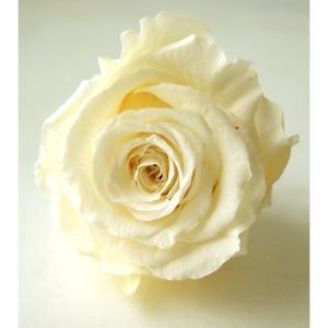 即日  プリザーブド プリマベーラMona ローズφ4.5〜5.5cm ブライダルホワイト 6輪入  は行 バラ ローズ|hanadonya