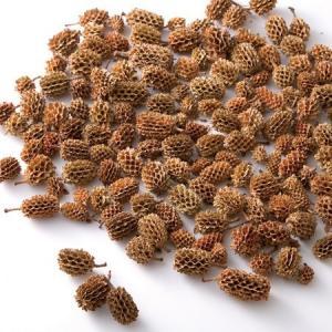 ドライ 東北花材 カスリナパッド ナチュラル 約100g 66022 01 ドライ実物&フルーツ 木の実