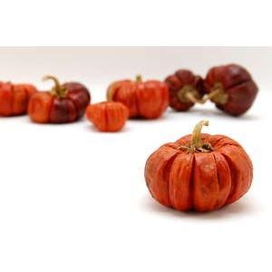 即日 ドライ コアトレーディング ミニパンプキンホール ナチュラルレッド 約5〜7個 30133 00 ドライ実物&フルーツ フルーツ、香りのアイテム