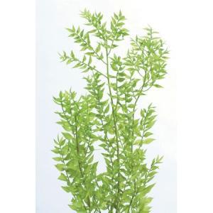 即日 プリザーブド 大地農園 ラスカス プリザーブド 40g ライムグリーン 0356-0-721 プリザーブドグリーン 葉物