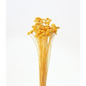 即日 ドライ 大地農園 ボタンフラワー 22g ゴールデンイエロー 30160-520 00 ドライフラワー花材 ボタンフラワー