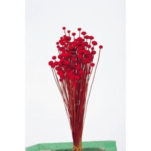 即日 ドライ 大地農園 アマレリーフラワー 22g レッド 30180-301 ドライフラワー花材 その他ドライフラワー