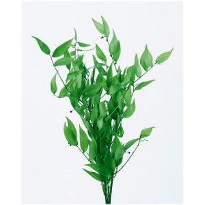 即日 プリザーブド 大地農園 イタリアンルスカス 約3本 フレッシュグリーン 03910-730 00 プリザーブドグリーン 葉物