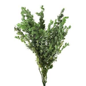 プリザーブド 大地農園 ロータスブリムストーン グリーン 20g 01140-700 01 プリザーブドグリーン 葉物
