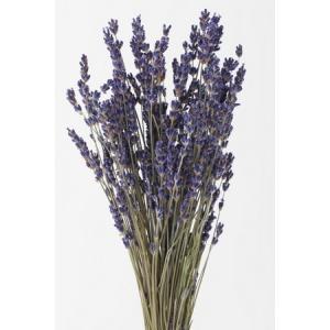 即日  ドライ 大地農園 ラベンダー イタリー N 30g 10040-000 00  ドライフラワー花材 ラベンダー