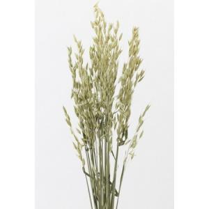 大特価 即日 ドライ 大地農園 アベナ NG 40g 50170-020 ドライフラワー花材 その他ドライフラワー