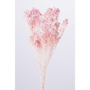 即日 ドライ 大地農園 モリソニア 15g入り ピンク 42130-101 ドライフラワー花材 カスミ草