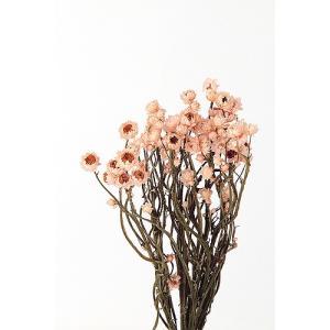 即日 ドライ 東北花材 アンモビューム ピンク 約30g 67306 ドライフラワー花材 アンモビューム