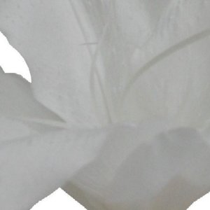 プリザーブド 南原農園 カサブランカS ホワイト  1輪入り か行 カサブランカ|hanadonya