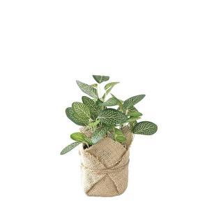人工観葉植物 SPICE ジュートポット入りフェイクグリーン フィットニア TADY7010 6個 人工観葉植物「か行」 カジュアルポット|hanadonya