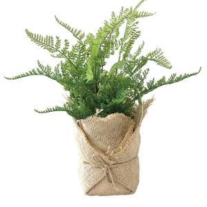 人工観葉植物 SPICE ジュートポット入りフェイクグリーン シダB TADY7030 2個 人工観葉植物「か行」 カジュアルポット|hanadonya