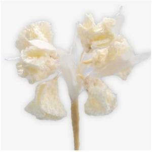 造花 サンセイ PT-07 ブーケ #14 アイボリー 566565 01  造花 花材「は行」 その他「は行」造花花材|hanadonya