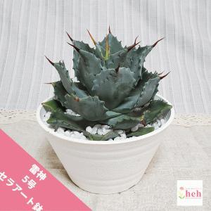 再入荷: 雷神 5.0 セラアート鉢 アガベ 観葉 多肉 植物 送料無料 お祝い インテリア プレゼント 種類の画像
