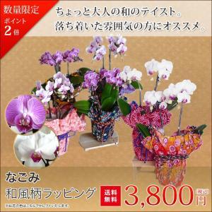 ミディー胡蝶蘭 4.0号 陶器鉢 母の日 ギフト プレゼント 送料無料 和風ラッピング 花鉢 フラワーギフト ※花の色 ラッピング柄、お任せください|hanaerikaheh2008y