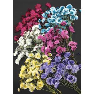 5ae6b9b7b3 押し花 セット かすみそう Mix お花屋さんの上質な押し花 押し花 カスミソウ(6 ...