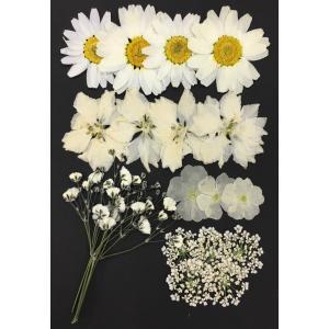 4c700e6387 押し花 セット ホワイト&オフホワイト Mix お花屋さんの上質な押し花 ハンドメイド UV ...