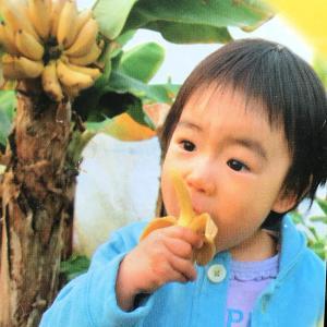 ●品種の特徴  矮性 (わいせい)で大きくなりにくいドワーフモンキーバナナの登場です。バナナは熱帯植...