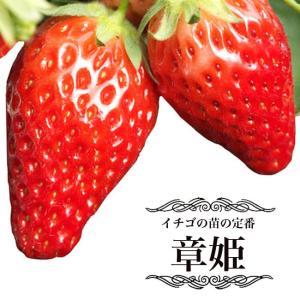 いちご 苗 章姫 ( あきひめ ) 3号ポット苗 イチゴ 苺 予約販売9月末頃入荷予定